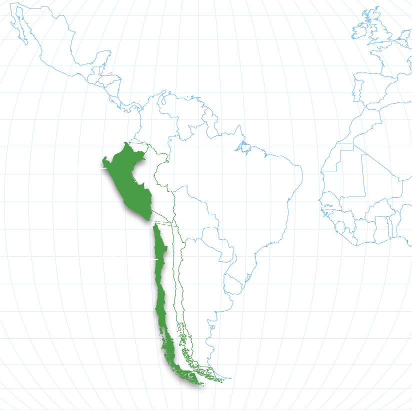 map of growing regions for grapes with Chile and Peru highlighted